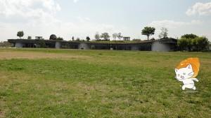 koroneko昭和記念公園1